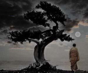 arbre de verite